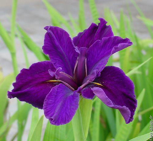 fleur d iris blogs fr le multim 233 dia 100 facile et gratuit